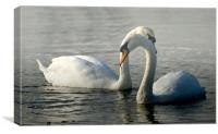 Ride a white swan, Canvas Print