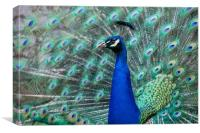 Peacock in flower, Canvas Print