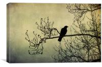 the crow 2, Canvas Print
