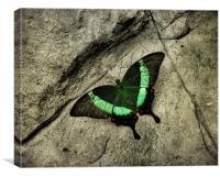 Emerald Swallowtail, Canvas Print