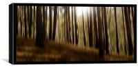 forest dreams, Canvas Print
