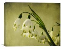 spring snowflakes (vintage)
