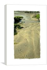 tracks on the sand, Canvas Print