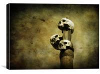 3 skulls, Canvas Print