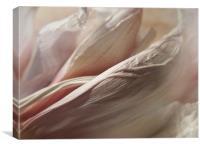 Allium Sativum, Canvas Print