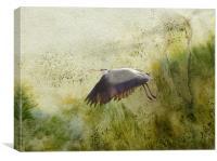 heron in flight, Canvas Print