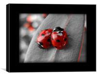 ladybirds (rework with border), Canvas Print