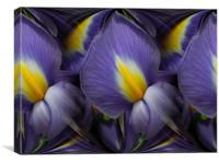 iris abstracted, Canvas Print