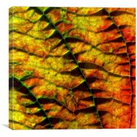abstract autumn leaf, Canvas Print