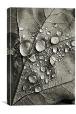 monotone autumn, Canvas Print