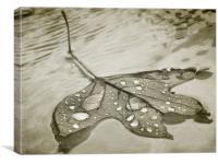 floating leaf (sepia), Canvas Print