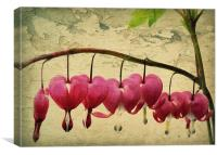 bleeding hearts, Canvas Print