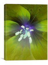 alien geranium (lime tones), Canvas Print