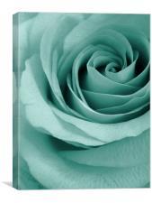 aqua rose, Canvas Print