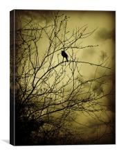 morning bird, Canvas Print