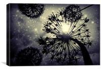 Allium sky, Canvas Print