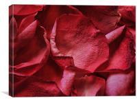 petals, petals, Canvas Print