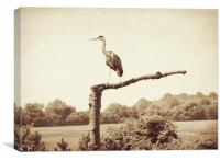 heron in sepia, Canvas Print