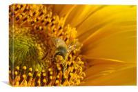 gathering pollen, Canvas Print