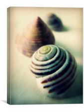 vintage seashells, Canvas Print