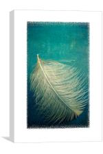 as soft as a feather, Canvas Print