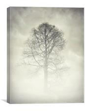 the winter tree, Canvas Print