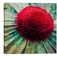 echinacea art, Canvas Print