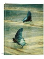 dance of the butterflies, Canvas Print