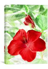 hibiscus red, Canvas Print