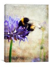 bumblebee blues, Canvas Print