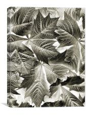 scattered leaves, Canvas Print