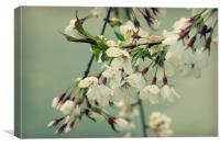 sweet blossom, Canvas Print