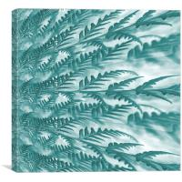frosted fern, Canvas Print