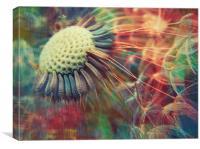 dandelion carnival, Canvas Print