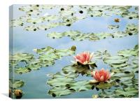 the tranquility of water lilies, Canvas Print