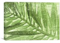 fern in stone , Canvas Print