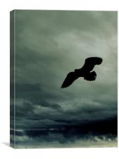 seagull over stormy seas , Canvas Print