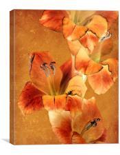 amber glow, Canvas Print