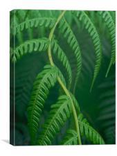 emerald fern, Canvas Print