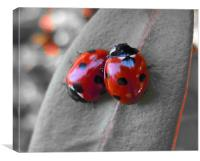Ladybirds, Canvas Print