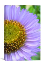purple petals, Canvas Print