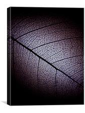 dark leaf, Canvas Print