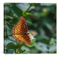 colourful orange butterfly, Canvas Print