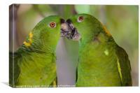 two parrots kissing, Canvas Print