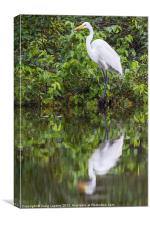 Great egret reflection, Canvas Print