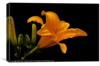 orange lily, Canvas Print
