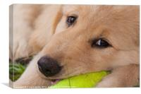 adorable puppy, Canvas Print