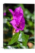 pretty purple flower, Canvas Print