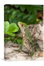 green iguana on the beach, Canvas Print