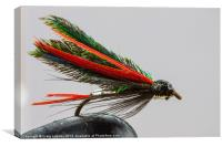 Trout fishing fly, Canvas Print